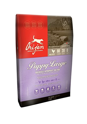 Orijen Large Breed Puppy - 28.6lb