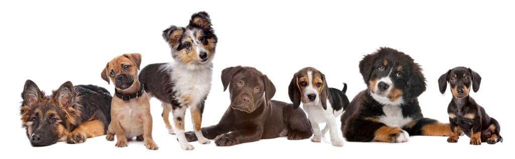 Puppies different breeds