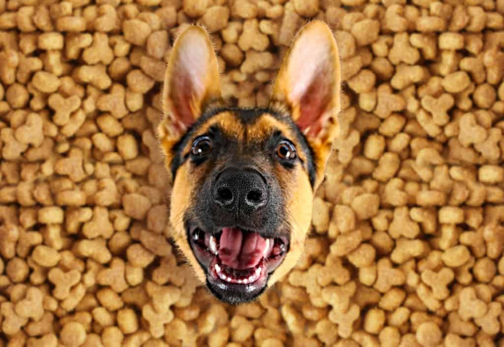 Too much food at the German Shepherd dog