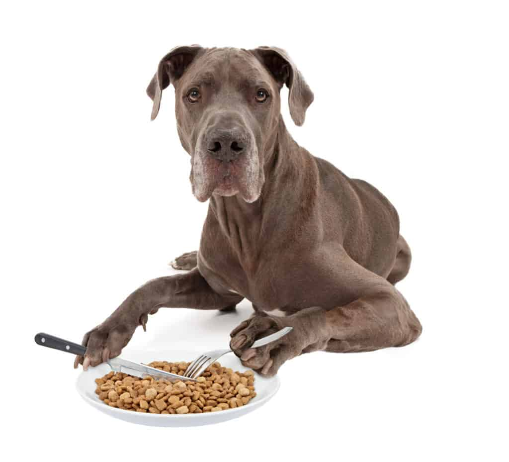 Best food for great dane