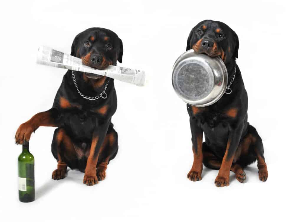 dog food for Rottweiler