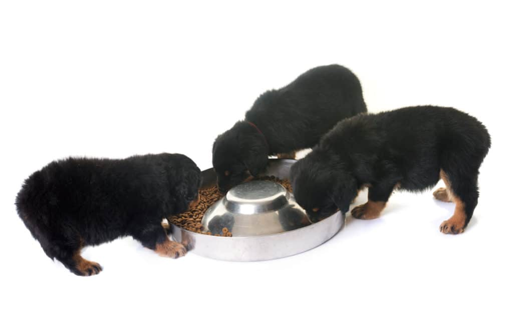 best food for Rottweiler puppy