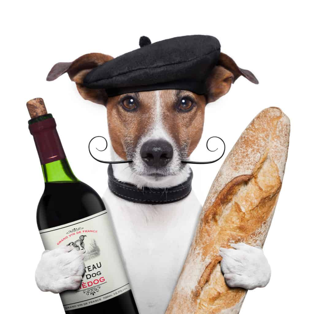 puppy with wine and baguette