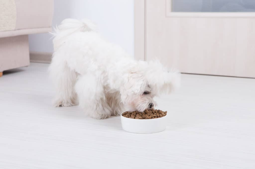 nutrisource dog food reviews