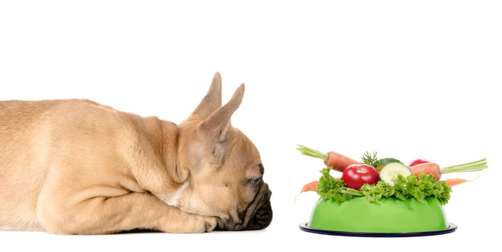 puppy food for sensitive stomach