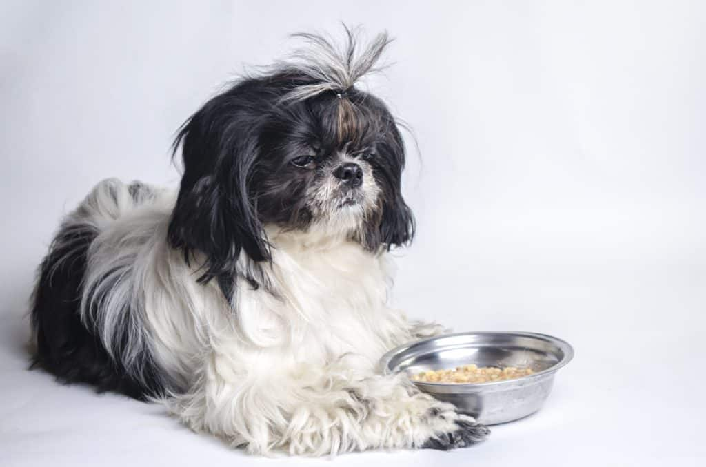 Shih Tzu dog food