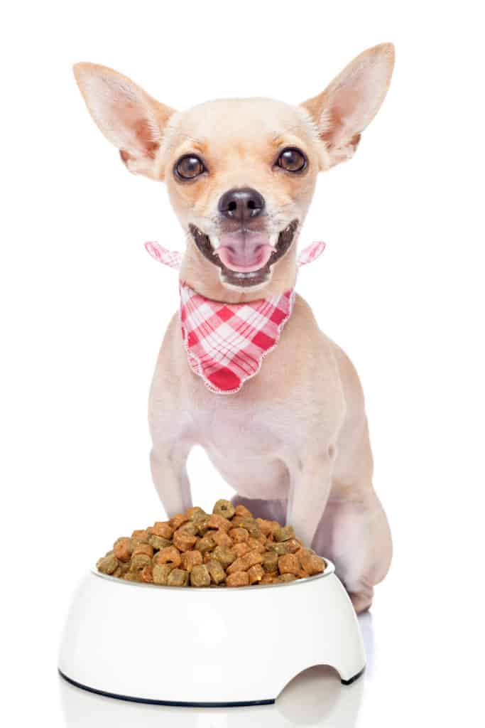 🦴 Best Food for Chihuahua Puppies in