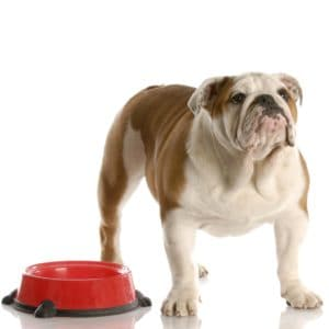 How Long To Feed Puppy Food To Your Puppy