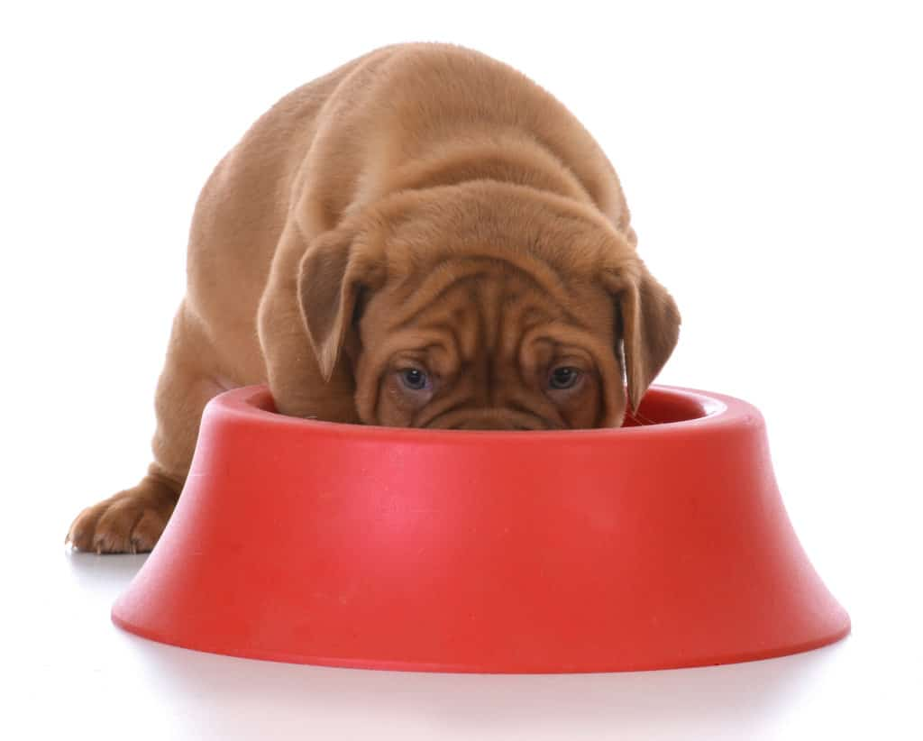 best food for mastiff puppy