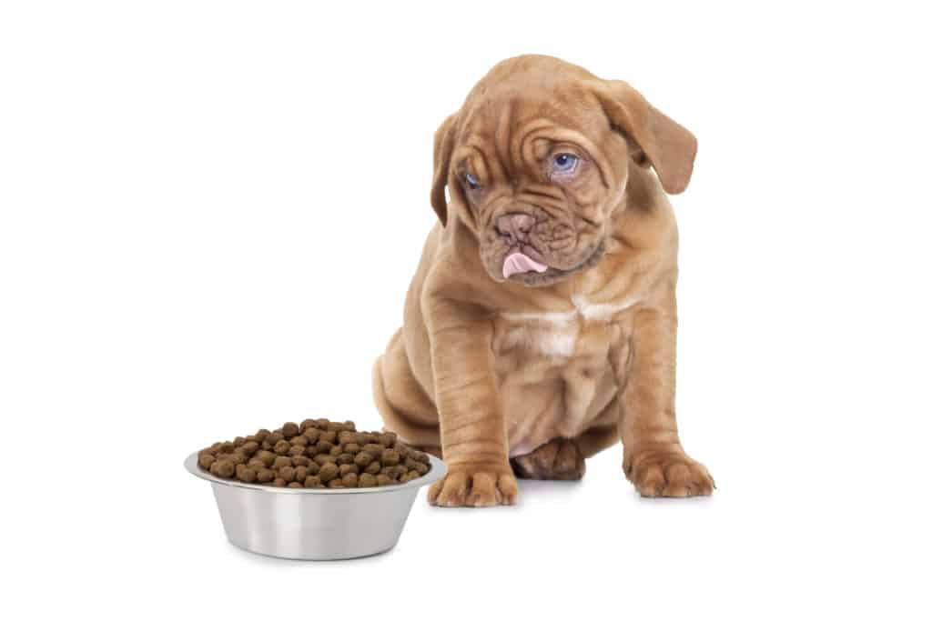 best puppy food for mastiffs