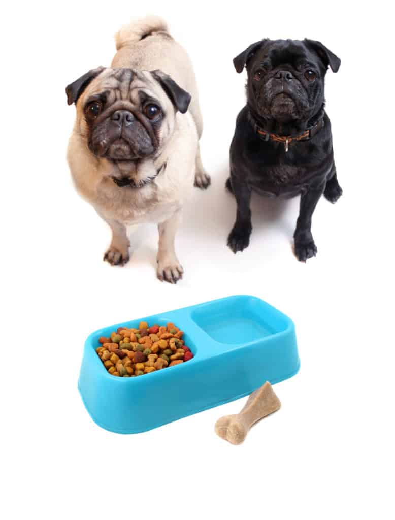 how long do you feed puppy food