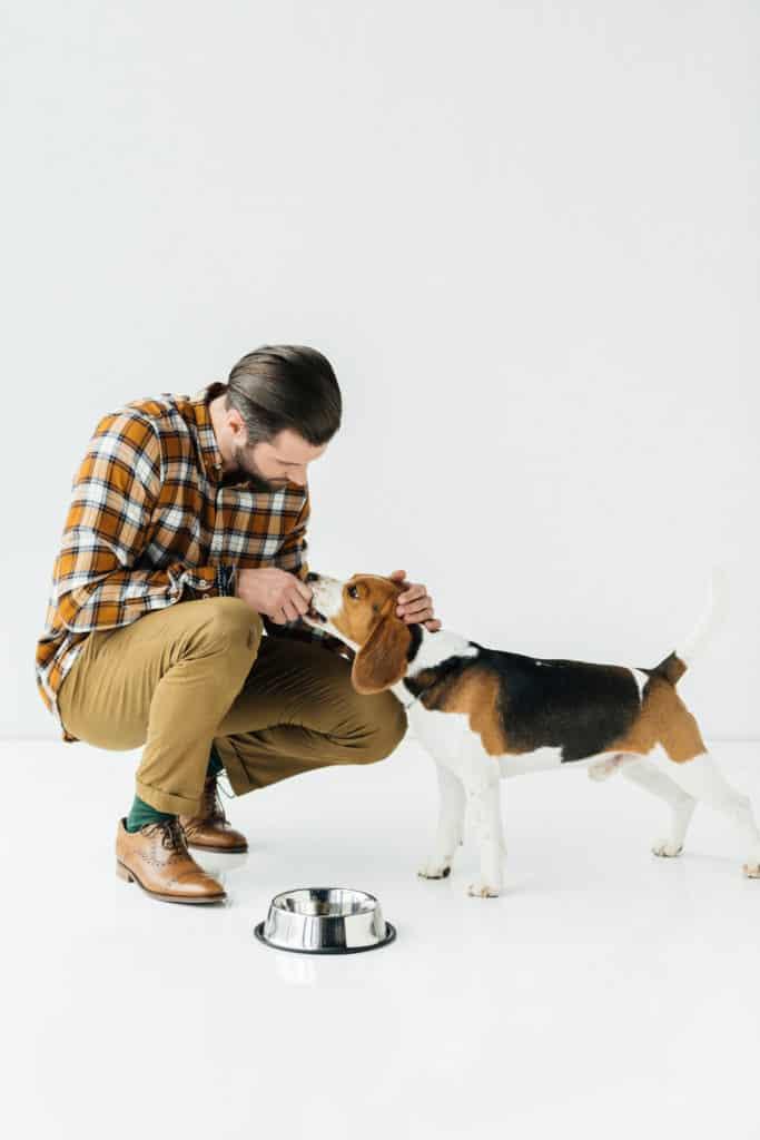 man Feed Puppy
