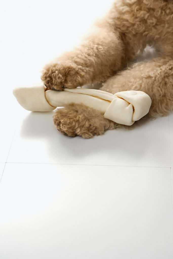 best puppy food for goldendoodle