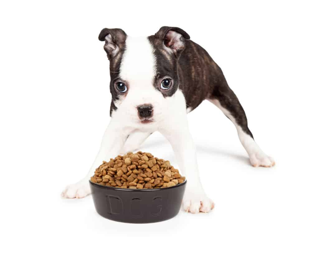 boston terrier food