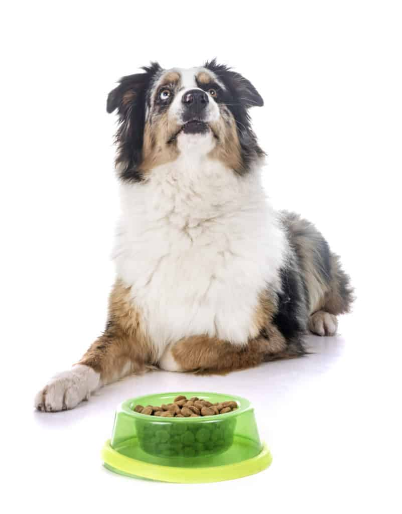 best dog food for australian shepherd