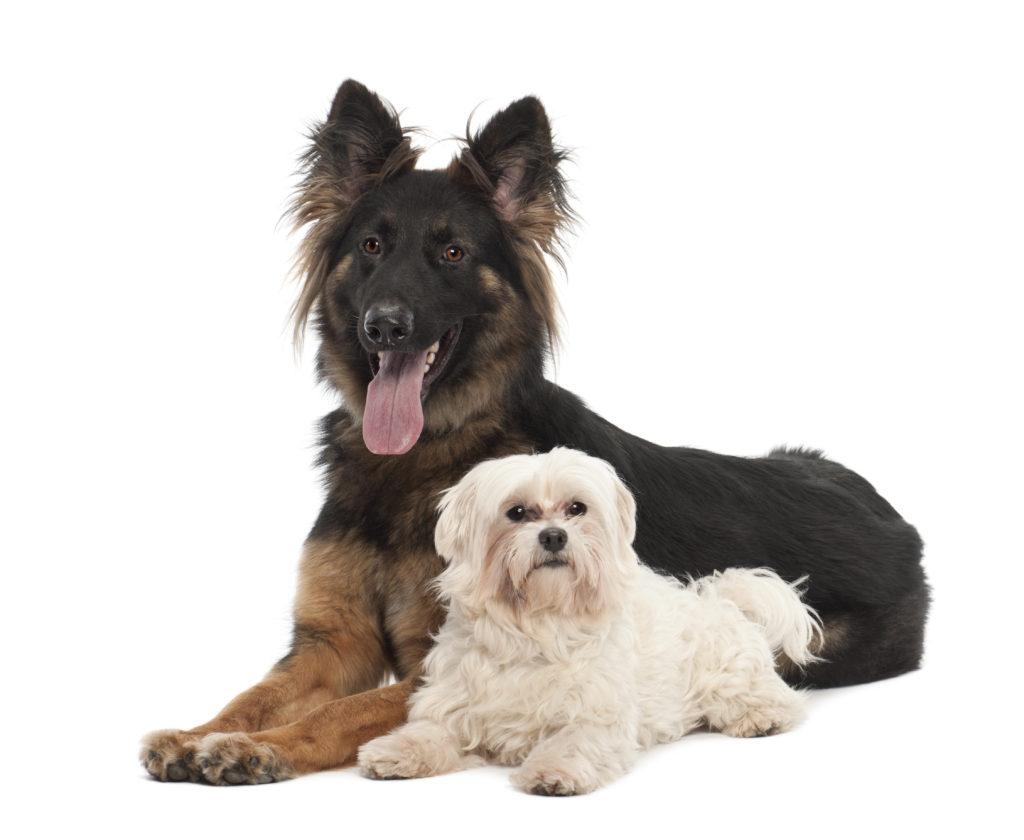 best dog food for older dogs