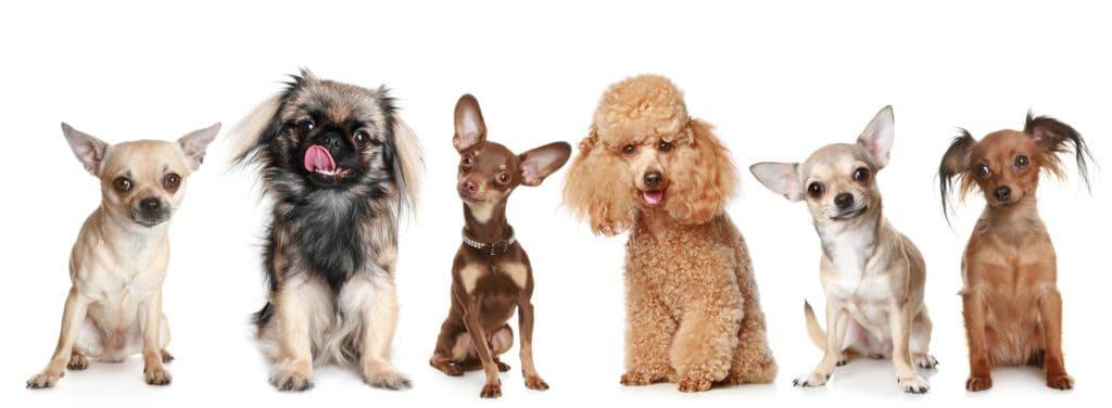 nature recipe dog food reviews
