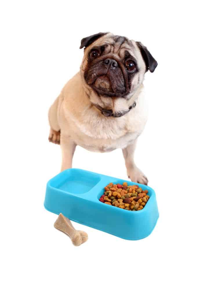 Pug dog food