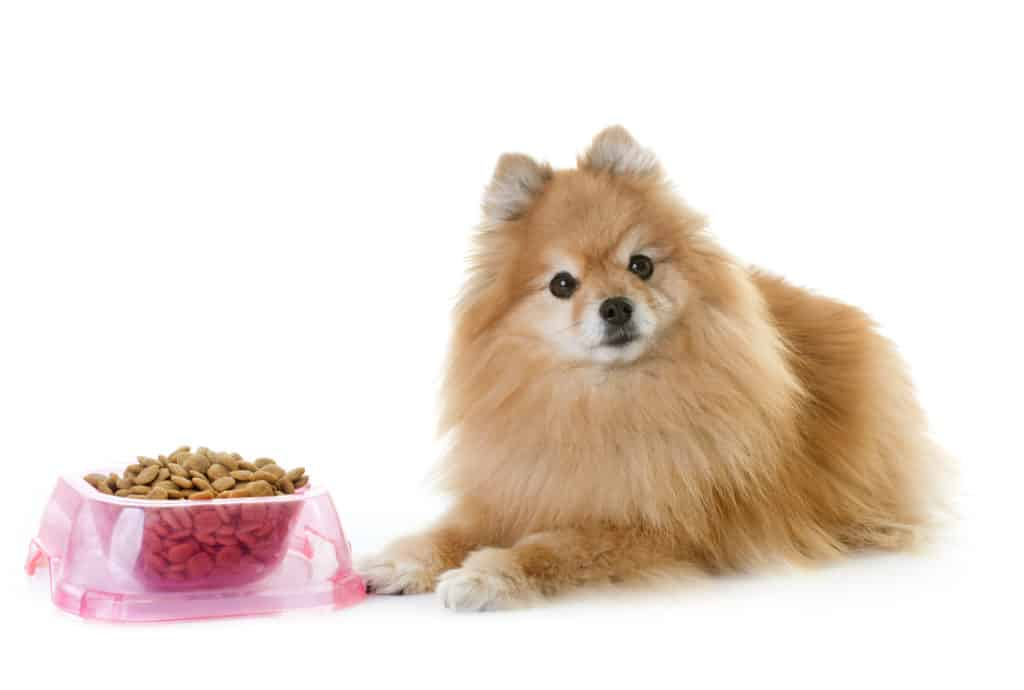best dog food for pomeranians
