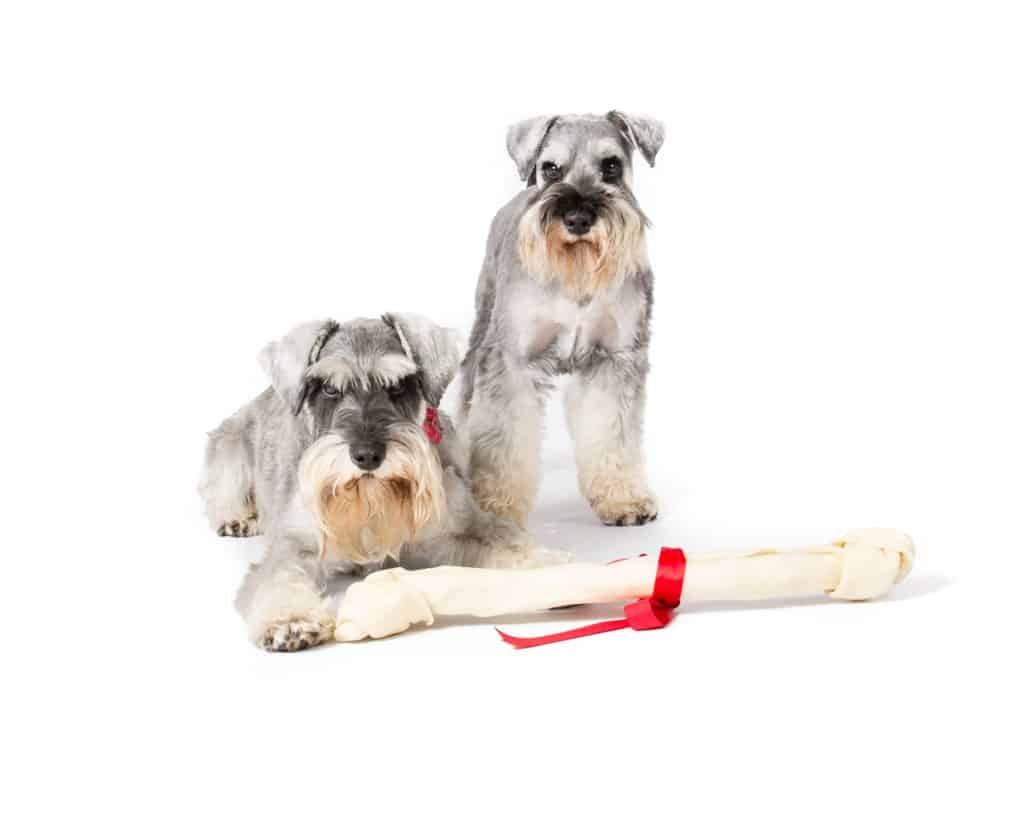 best food for miniature schnauzer