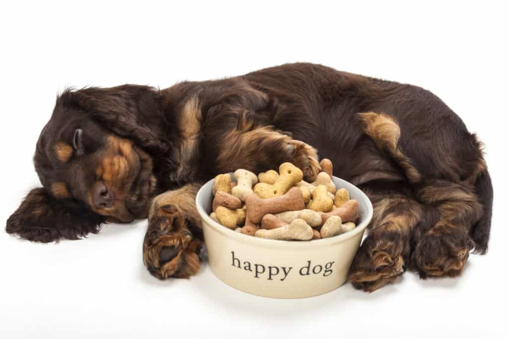 best dog food for cocker spaniel