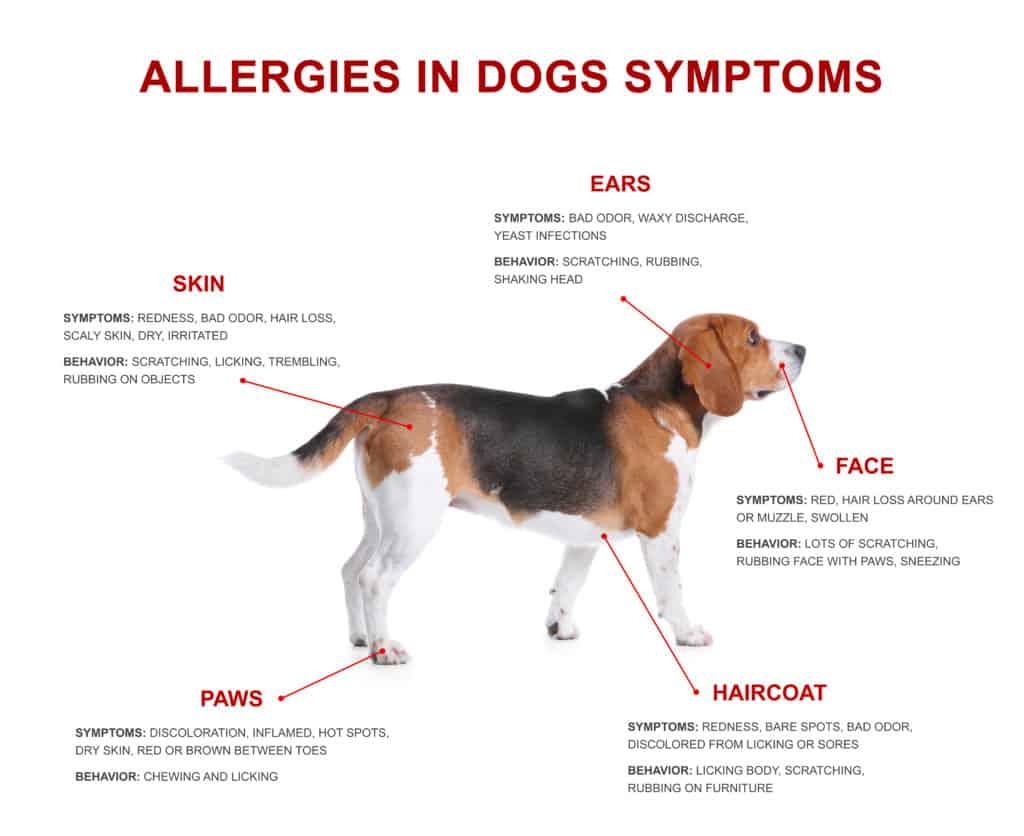 best dry dog food for skin allergies